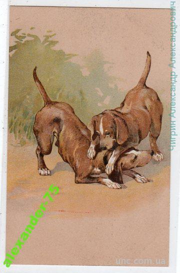 Собаки.Игривые щенки.