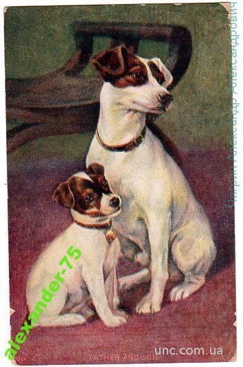 Собаки.Мать и щенок.