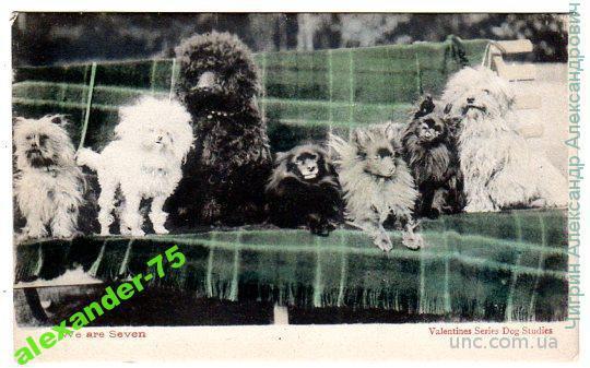 Собаки.Разные породы.