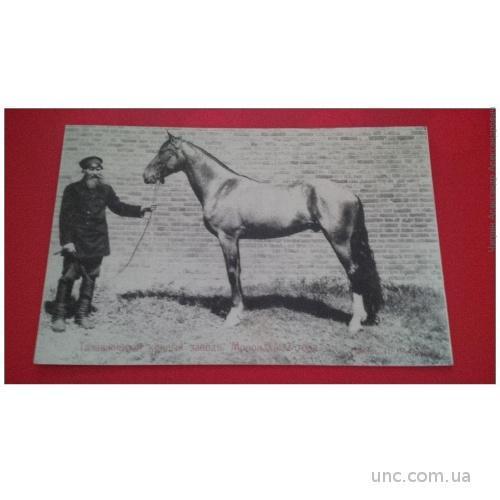 Талашкино. Талашкинский конный завод. Мономах 2 года.
