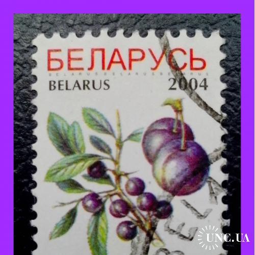 Почтовая марка  Р.Беларусь «Definitive  Issues - Ягоды тёрна» (2004 г.).