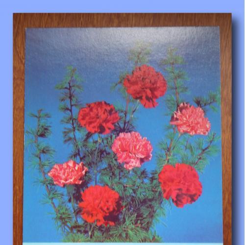 Почтовая  открытка  «23 февраля»  (4).