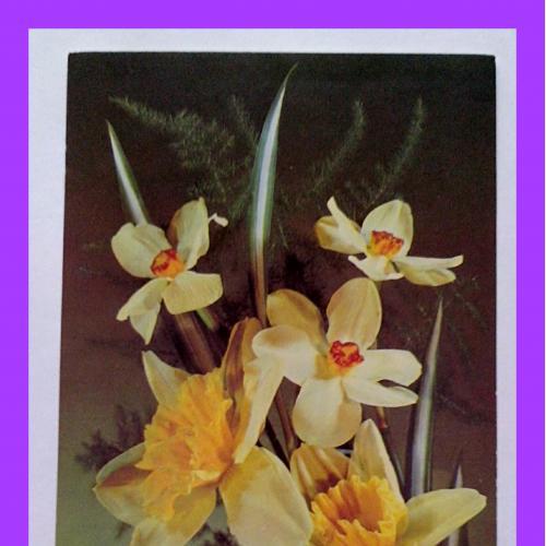 Почтовая  открытка  «8 Марта»  (6).