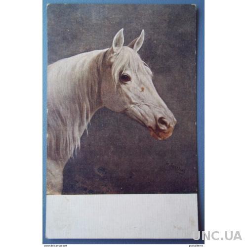 11620 Сперлинг. Голова лошади. CPA