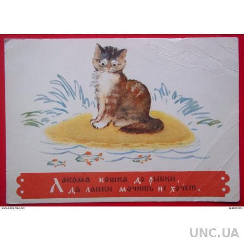 11910 Pussycat. Русская пословица