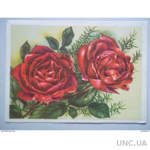 8157 Украина. Розы