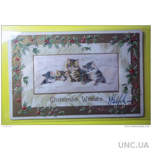 8903 Рождественские пожелания. Кошки. США. 1910