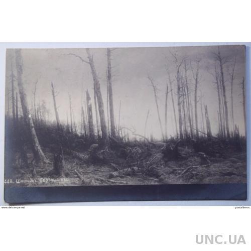 9441 В.Шишкин. Утомленный лес. CPA