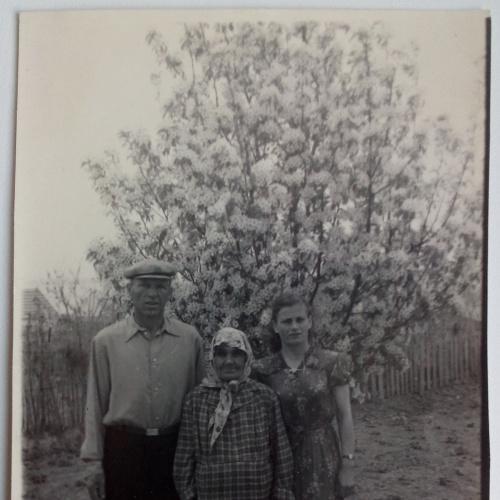 Фото.  Молодые с мамой. Семья  Груша цветет Весна