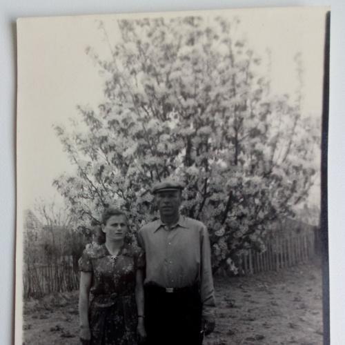 Фото.  Молодые Влюбленные Груша цветет
