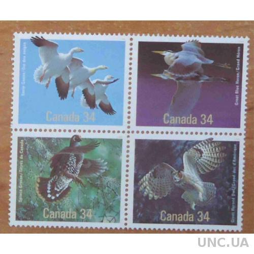 Канада - птицы**