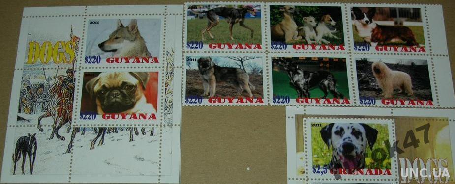 Гайана Фауна Домашние животные Собаки Серия