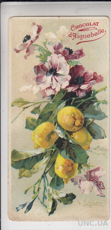 Старые открытки до 1920
