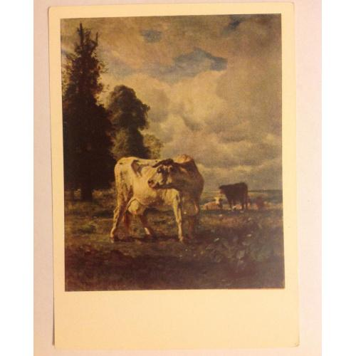 Коровы в поле. Худ. Трайон Коровы