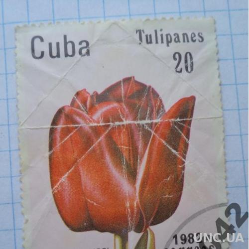 Марка почта Куба 1982 Тюльпан Цветы Флора