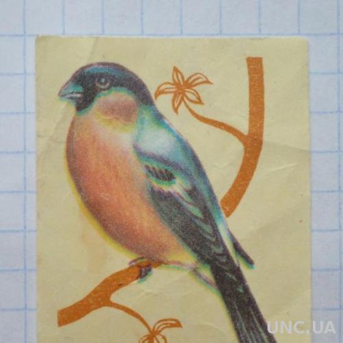 Спичечная этикетка Снегирь Фауна Птицы
