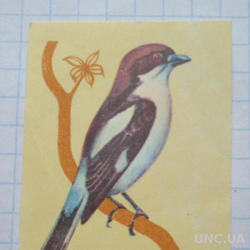 Спичечная этикетка Сорокопут красноголовый  Фауна