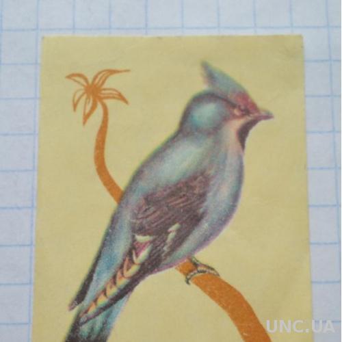 Спичечная этикетка Свиристель Фауна Птицы