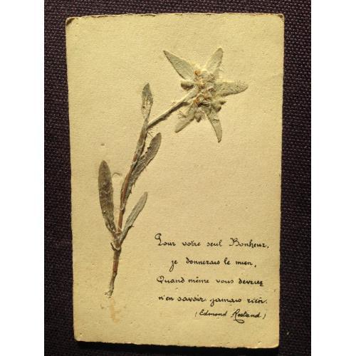 Французская открытка-аппликация. Нарцисс.