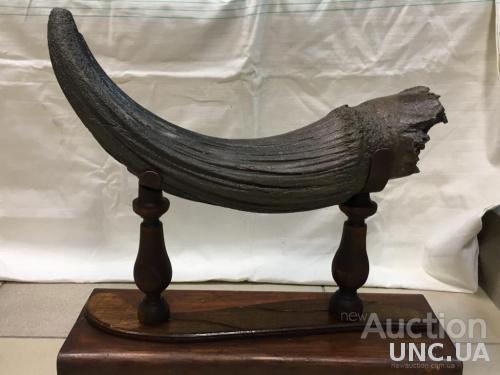 Рог доисторического существа