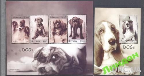 Гайана 2007 фауна собаки псы **