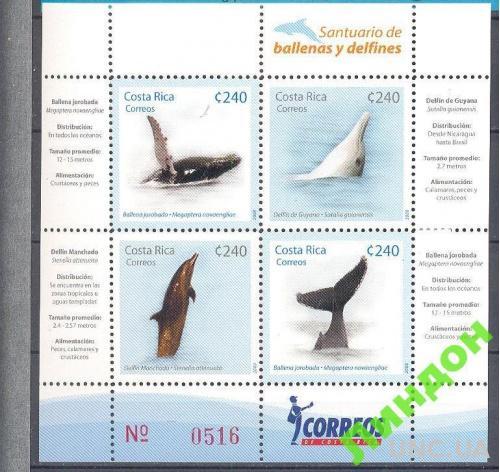 Коста Рика 2008 морская фауна киты дельфины **