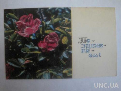 Поздравляю! Цветы фото Гиппенрейтера 1968 год