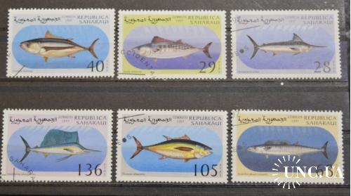 Фауна. Сахара. 1997 год