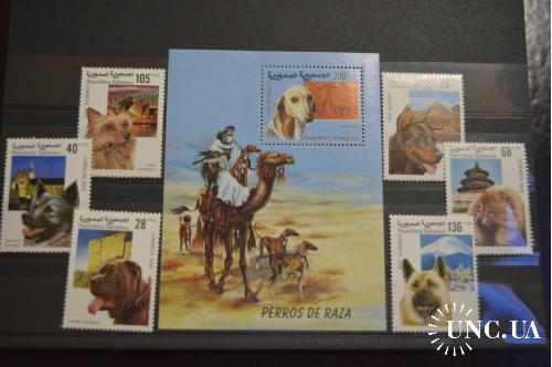 Сахара. Фауна. Собаки 2000 год