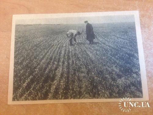 Азово - Черноморский Край. Проверка зерновых.