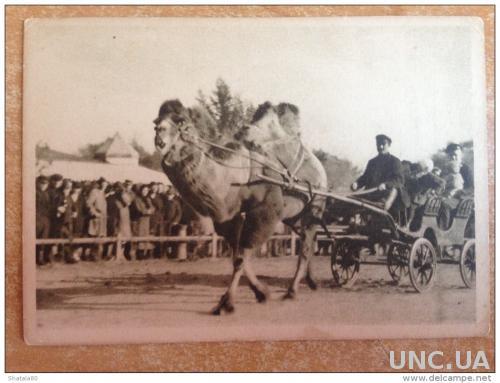 Старинная открытка Московский зоопарк Катание детей на верблюде