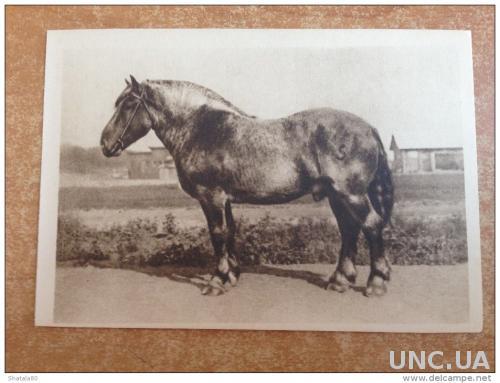 Старинная открытка Москва. Сельскохозяйственная выставка  Жеребец Залог брабансоинской породы Чемпион