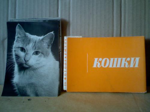 кошки  25 фото-открыток  Прага 1962 г.