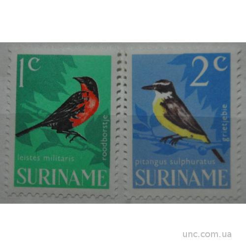 Суринам Фауна Птицы