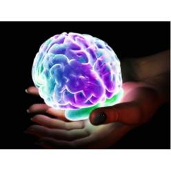 Як ставиться наш мозок до колекціонування?