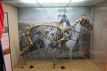 Ирландцы запросили у британского музея скелет коня Наполеона