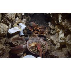 Археологами в Гватемале найдена гробница правителя майя
