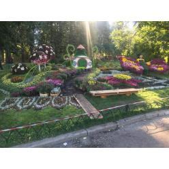 Сегодня в Киеве открытие фестиваля хризантем