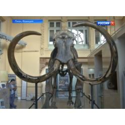 Во Франции на торгах представят скелет мамонта