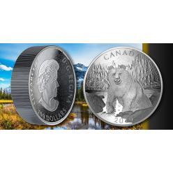 В Канаде представили новую серебряную монету «Бурый медведь»