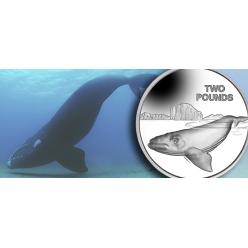 Британские Антарктические территории выпустили монеты с южным гладким китом