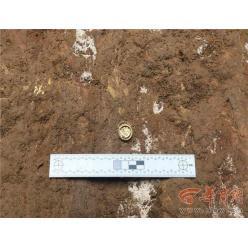 В Китае в захоронении обнаружены самые старые иностранные монеты