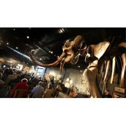 На торгах во Франции скелет мамонта ушел с молотка за € 548 000