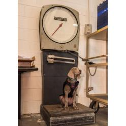 У Музеї образотворчих мистецтв Бостона з'явився новий співробітник — щеня Райлі