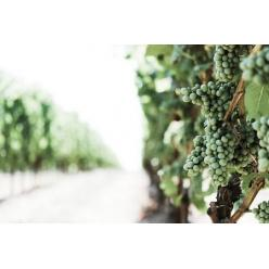 Найдена винодельня библейского Навуфея