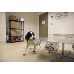 В Пенсильвании собак обучают находить артефакты, которые ввозятся в страну нелегально