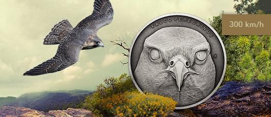  В Чехии представлена монета с изображением самого быстрого крылатого хищника