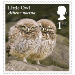 Королевская почта посвятила серию марок совам